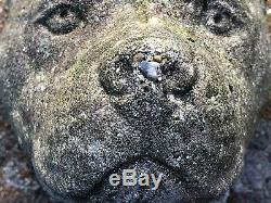 Pair Old Staffordshire Bull Terrier Garden Stone Entrance Gate Bust Head Statues